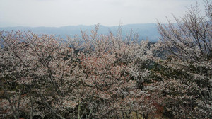 Img_20130414_130811213a